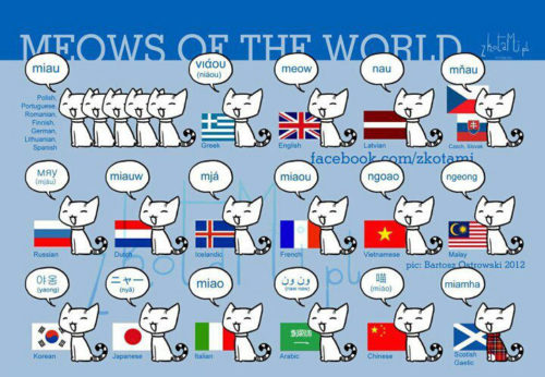 MEOWS OF THE WORLD