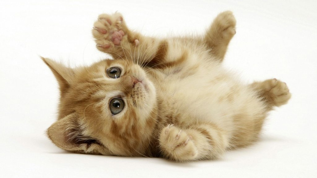 6 Reason you should consider being a cat