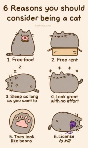 NEKOCATLOVERS_PUSHEEN
